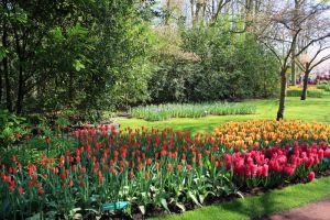 Keukenhof 2 by Angie-Pictures