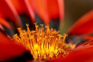 Pollen II - The meeting in the spring by AlejandroCastillo
