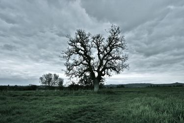 oak by stuartreading
