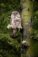 My Day with an Owl by Behrfeet