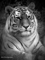 Mother Amur by erbphotography