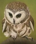 Owl you need is love by 130Dk