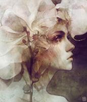 Petal by escume