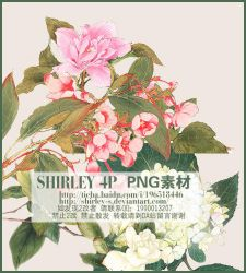 Shirley-png-201222 by SHIRLEY-S