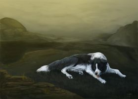Border Collie by cottondragon