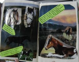 1st Altered Book 16, Favorites by angelstar22