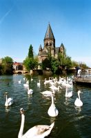 The Swans of Metz by SmileyG