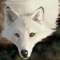 WhiteFeather - WQ Forums by WindSeeker