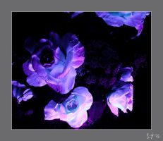 black light flowers by kuso