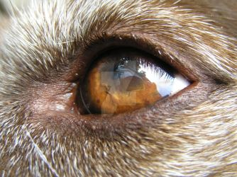 Candy's Eye by Readsway2much