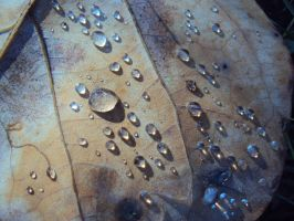 Waterdrops by X2010