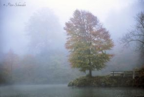 Foggy morning. by Phototubby