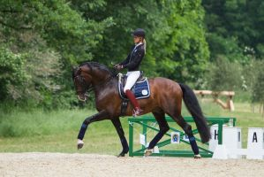 Lusitano Dressage Training Extended Trot Stock by LuDa-Stock