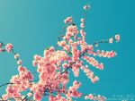 :: cyan and pink :: by Phantom-of-light