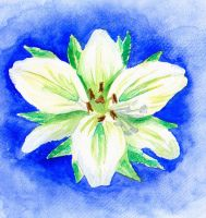 White Lily by LoVeras