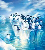 Penguins by Fany001