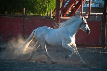 DWP FREE HORSE STOCK 481 by DancesWithPonies