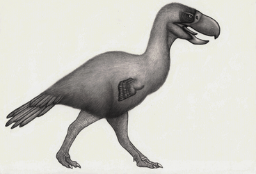 Paraphysornis brasiliensis by VINISSAURO