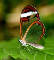 glass wing by bexa