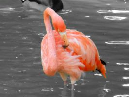 Flamingo 6 by Busted-Love