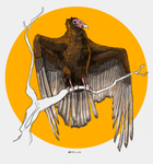 turkey vulture tattoo concept by jeheil