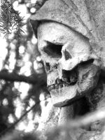 Portrait of a Skull by Tricia-Danby