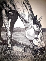 Horse Eating - Pen and Ink Illustration by golucky05