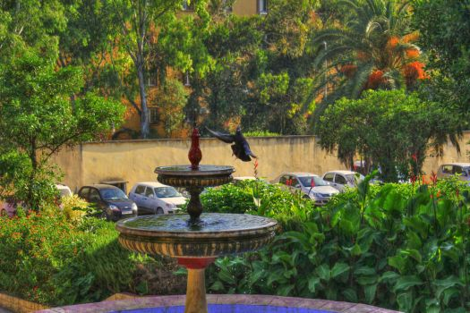 PIGEON-HDR by winab