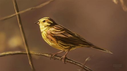 Yellowhammer study by Thalathis