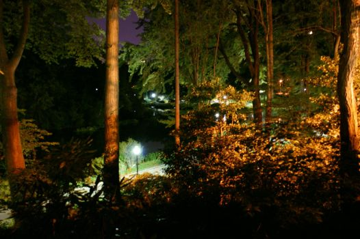 Central Park At Night 3 by Whickender