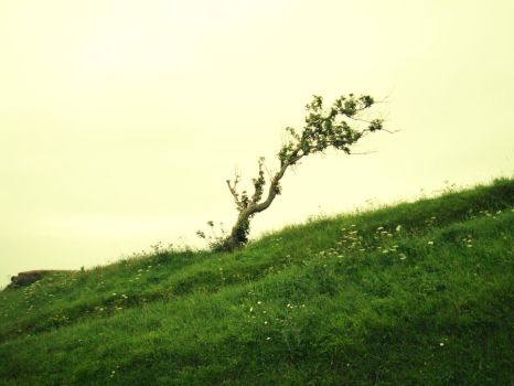 Tree in Normandy by Superbiaa