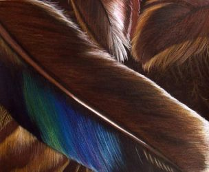 Feathers - Higher Quality by snowbringer