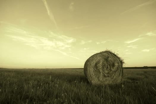 Hay by ivekvatrozic