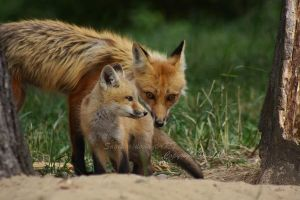 Mother And Cub by Sagittor