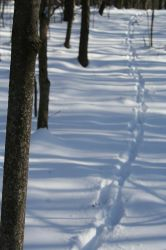 Foot Steps in the Snow by hollysfollys
