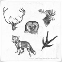 6 Vintage Animals High Res PS brushes by iCatchUrDream