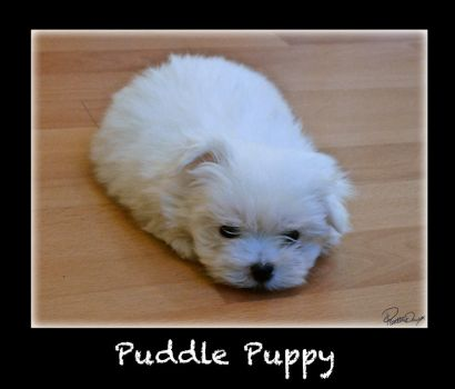 Blob of Cupcake - Puddle Puppy by porpierita