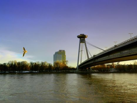 Bratislava and fly seagull by ChiaraSnicket