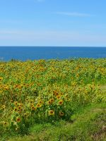 Sunflower-Colored Fishing Nets by katters