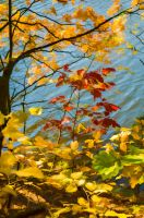 leaves by marrciano