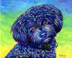 Colorful Pet Portrait - Linwood the Toy Poodle by rebeccawangart