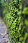 Green Wall by largethomas