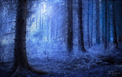 Blue Forest by Pajunen