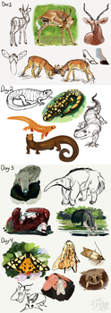 Animal Studies Challenge Day 1-4 by MrGremble