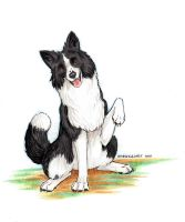 Border Collie by Stormslegacy