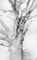 An Oak in the Park by DChernov