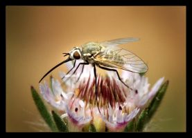 Fly II by mutos