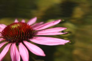 The Flower in the Water by Kaddastrophic