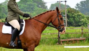 Dressage Stock 001 by HKW1994