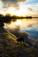 Fairlop Waters - 9. by LouHartphotography